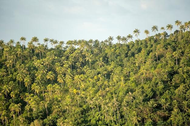 Zielone drzewa kokosowe w górach podczas zachodu słońca na wyspie koh phangan, tajlandia