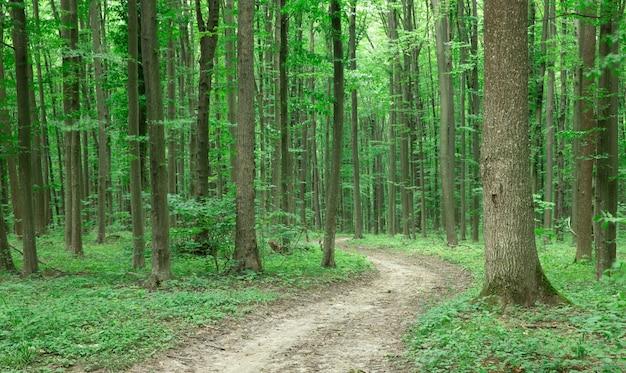 Zielone drzewa leśne. natura zielone światło słoneczne drewna tła
