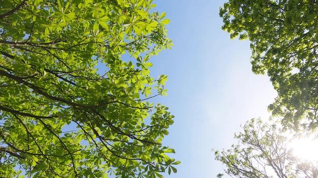 Zielone drzewa leśne przeciw błękitne niebo i letnie słońce. zdjęcie 4k w zwolnionym tempie. bali, indonezja.