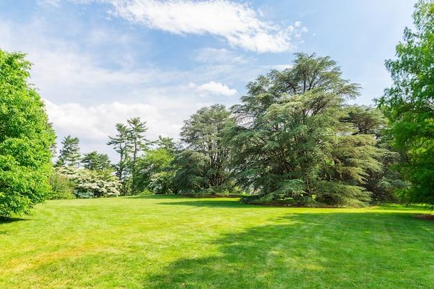 Zielone drzewa na łące trawy.