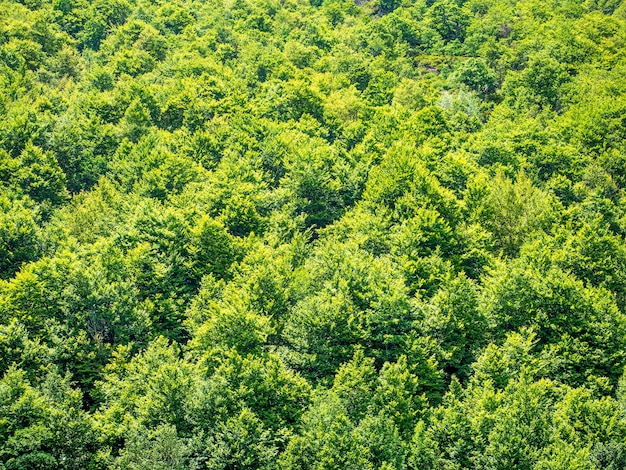 Zielone drzewa natura tło