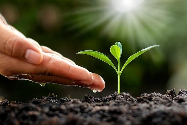 Zielone drzewa rosnące na ziemi i rolnicze ręce, które podlewają drzewa, koncepcja uprawy drzew i ochrona zrównoważonej przyrody.