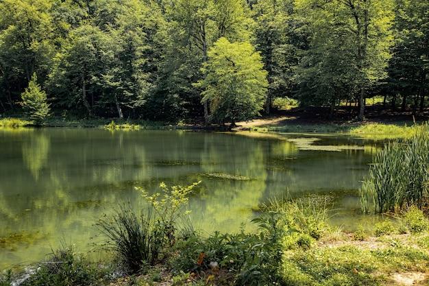 Zielone drzewa w lesie i jeziorze