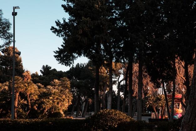 Zielone drzewa w lesie lub ogrodzie