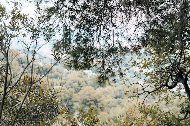 Zielone drzewa w lesie