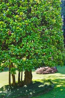 Zielone drzewa w letnim parku miejskim