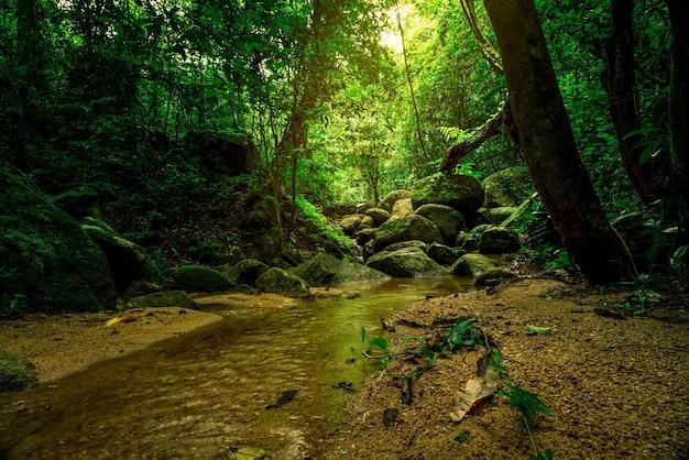 Zielone drzewo i skała w tropikalnym lesie.