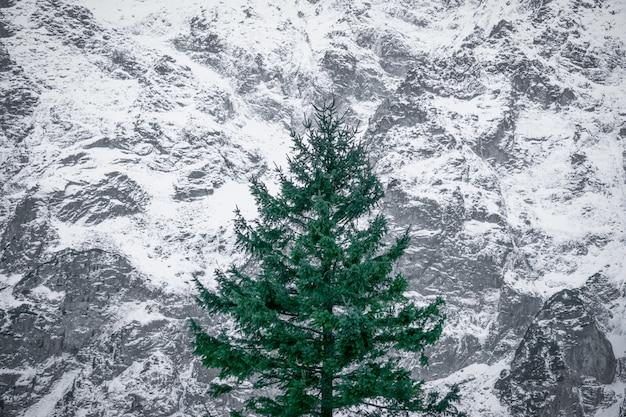 Zielone drzewo na ośnieżonych górach