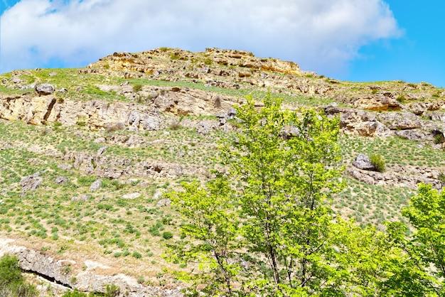 Zielone drzewo na zboczu góry
