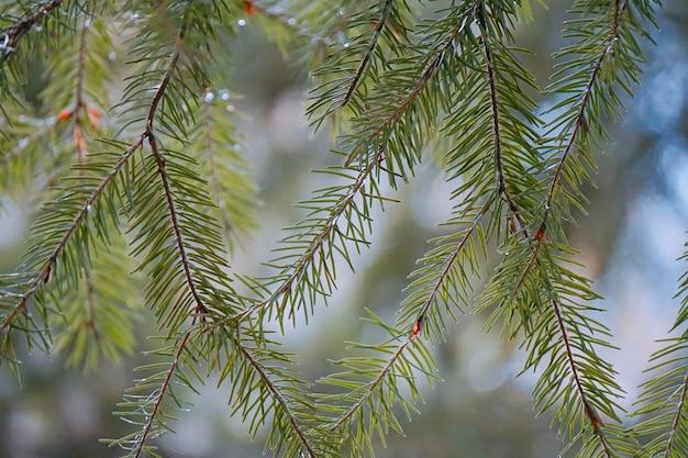 Zielone drzewo pozostawia gałęzie w naturze
