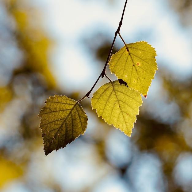 Zielone drzewo pozostawia w naturze, zielone tło