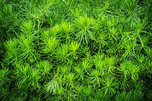 Zielone drzewo roślin i liści tekstury i powierzchni