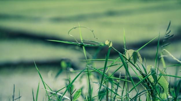 Zielone drzewo rozmazane tło