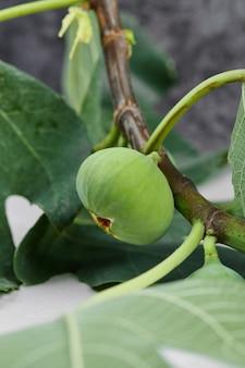 Zielone figi na białym tle z zielonymi liśćmi.