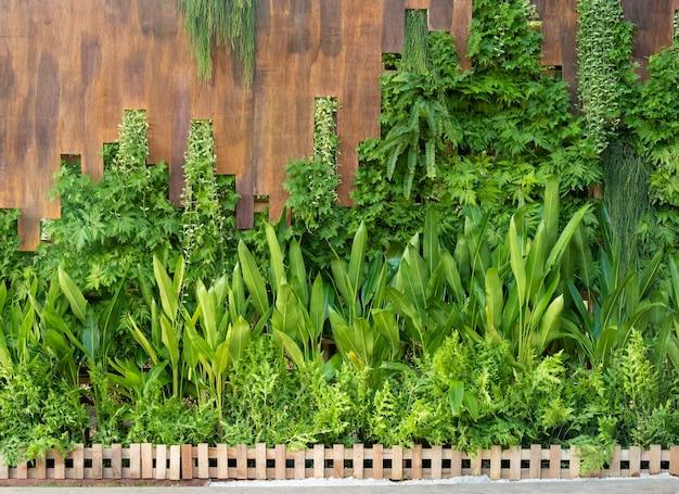 Zielone gałązki winorośli na drewnianej ścianie i bujna zielona roślina ogrodowa z małym drewnianym płotem