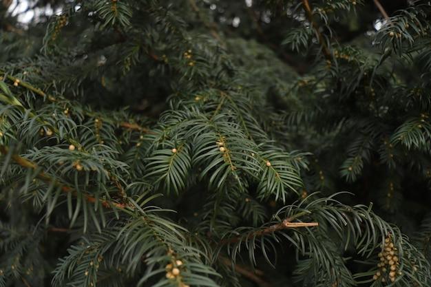 Zielone gałęzie krzewią się jak choinka