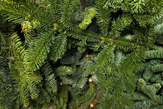 Zielone gałęzie świerkowe, naturalne tło