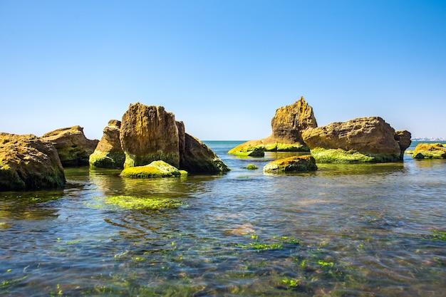 Zielone glony na brzegu morza i kamienie