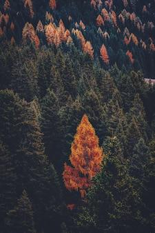 Zielone i brązowe drzewa na górze