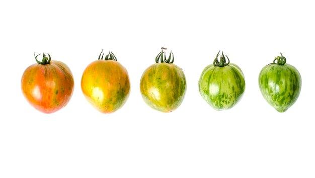 Zielone i dojrzałe pomidory o prążkowanym kolorze skórki