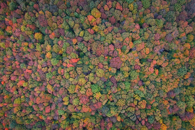 Zielone i żółte liście drzew. jesienny widok z góry na las. naturalne tło lub tekstura.