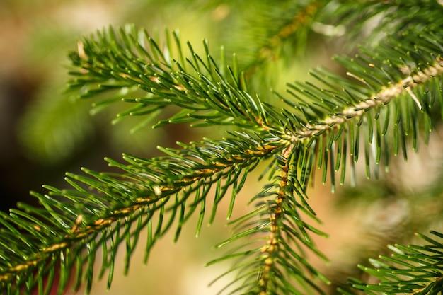 Zielone igły na drzewie