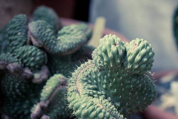 Zielone kaktusy i sukulenty selektywne focus zamknij