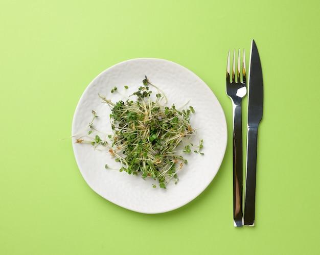 Zielone kiełki chia, rukoli i musztardy na białym okrągłym talerzu, widok z góry. zdrowy suplement diety zawierający witaminy c, e i k.