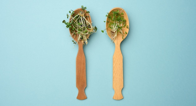 Zielone kiełki chia, rukoli i musztardy w drewnianej łyżce na niebieskiej powierzchni, widok z góry. przydatny dodatek do żywności zawierającej witaminy c, e i k.