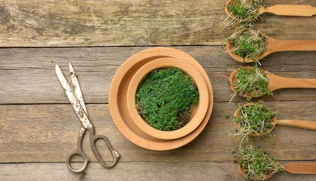 Zielone kiełki chia, rukoli i musztardy w drewnianej łyżce na szarej powierzchni ze starych szarych desek, widok z góry. przydatny dodatek do żywności zawierającej witaminy c, e i k, widok z góry