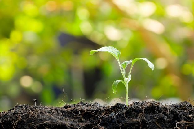 Zielone kiełki rosnące z nasion w glebie organicznej