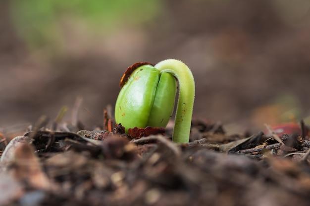 Zielone kiełki wyrastające z gleby.