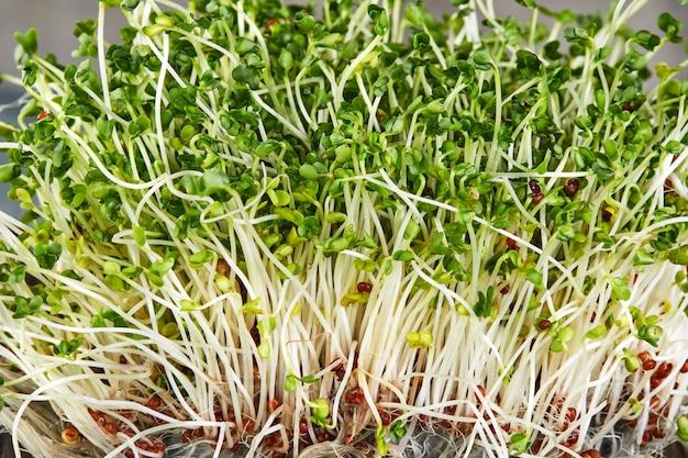Zielone kiełki z korzeniami, zdjęcie makro. tekstura