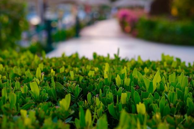 Zielone krzewy na pierwszym planie naturalne zielone tło wysokiej jakości zdjęcie