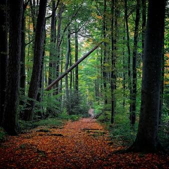 Zielone liściaste drzewa w ciągu dnia