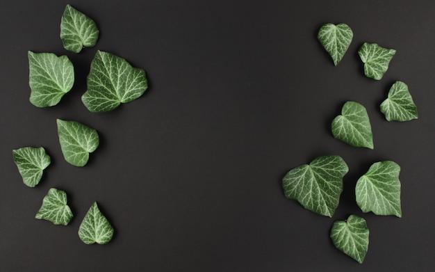 Zielone liście bluszczu na czarnym tle. miejsce na tekst