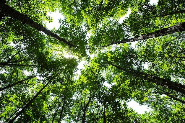 Zielone liście drzew leśnych w letnie słońce świecące przez liście, naturalne płótno tekstury.