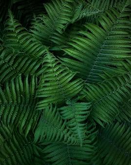 Zielone liście dzikiej paproci leśnej. tekstura.