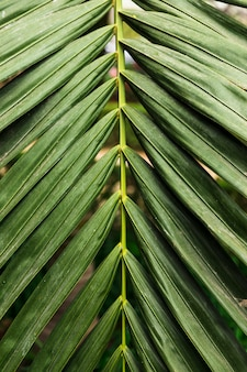 Zielone liście egzotyczne z bliska
