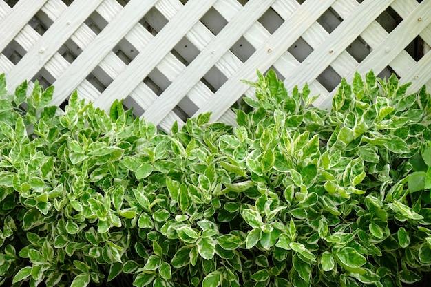 Zielone liście i ściana z drewna