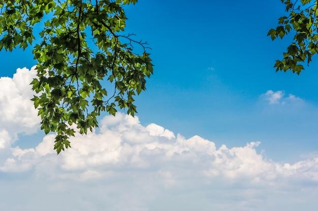 Zielone liście i słońce