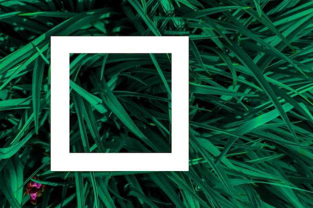 Zielone liście jako tło i biała kartka papieru na etykiecie.