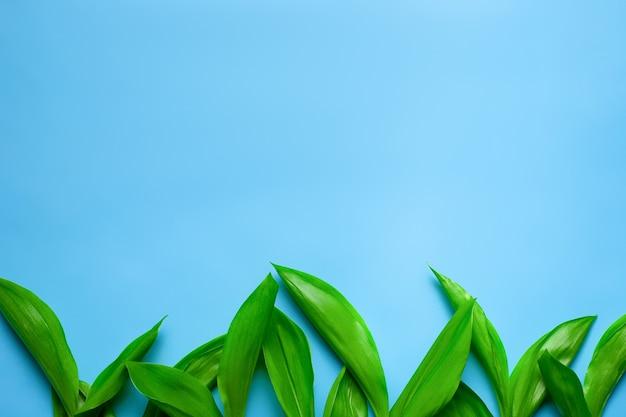 Zielone liście konwalii jako kwiecista granica z płaską przestrzenią do kopiowania leżały na niebieskim tle