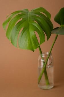 Zielone liście monstera lub monstera deliciosa w wazonie na brązowym tle