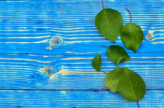 Zielone liście moreli na drewnianym niebieskim tle