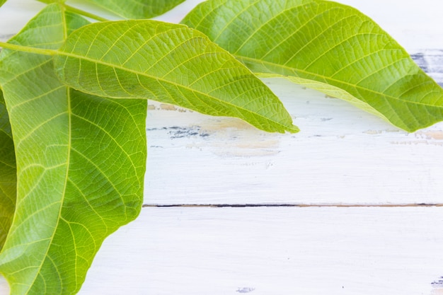 Zielone liście na białym drewnianym stole
