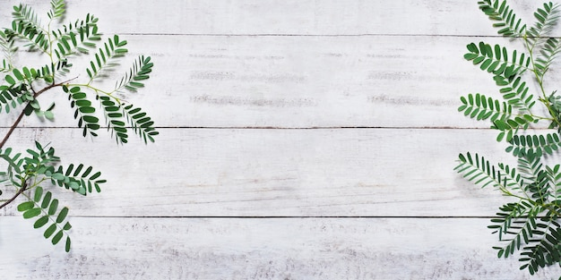 Zielone liście na białym rocznika drewna