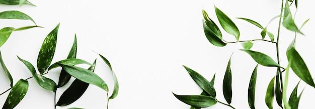 Zielone liście na białym tle jako ramka botaniczna flatlay eco design i wiosna natura flat lay co...