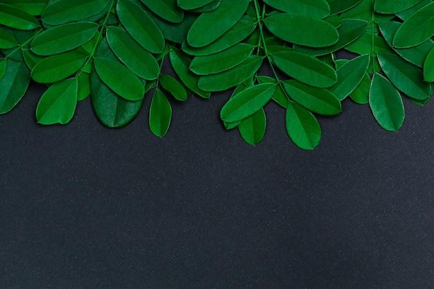 Zielone liście na czarnym tle z miejsca na kopię. naturalne tło