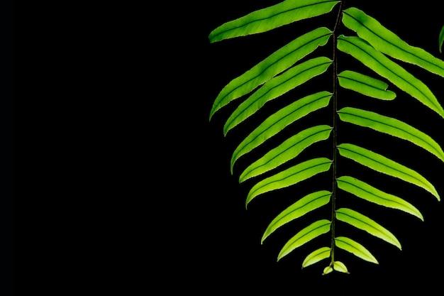 Zielone liście na czarnym tle